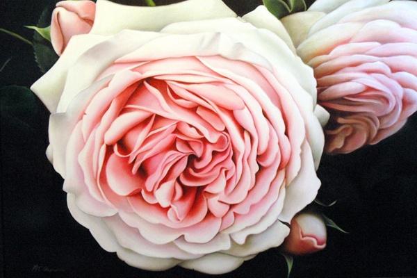 my lady rose